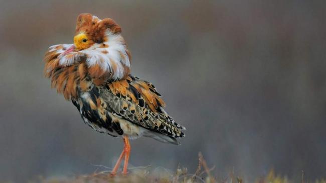turuhtan-ptica-s-jarkim-vorotnikom-animal-reader.ru--1024x576.jpg
