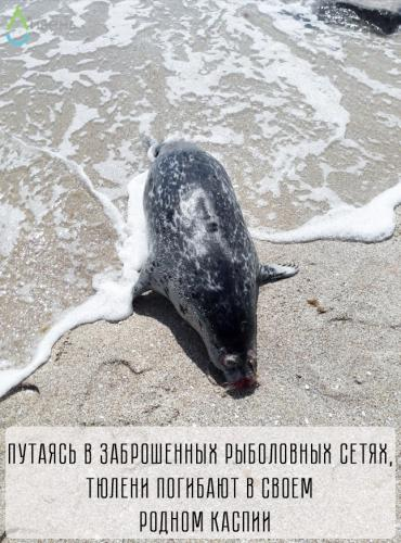 тюлени_фото4.jpg