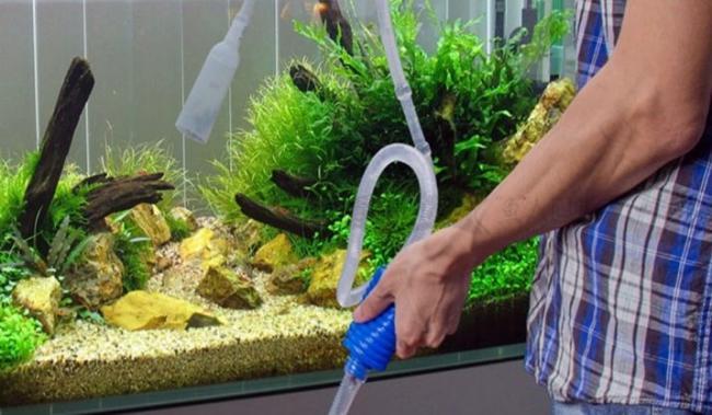 kak-pravilno-i-skolko-nuzhno-otstaivat-vodu-dlya-akvariuma-3.jpg