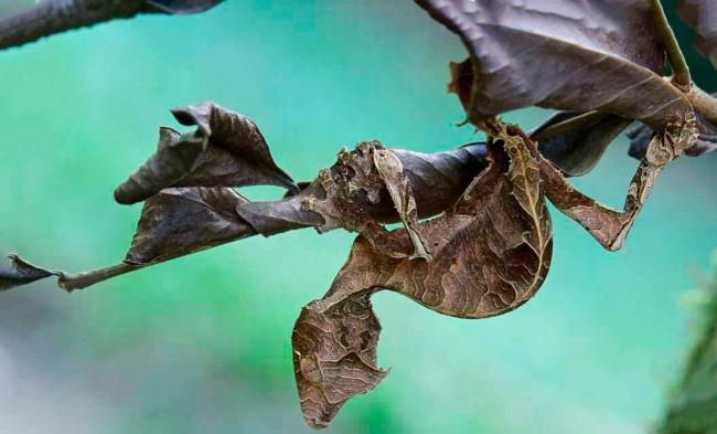 listohvostyy-gekkon-na-vetke.jpg