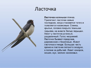 pereletnaya-ptitsa-lastochka.jpg