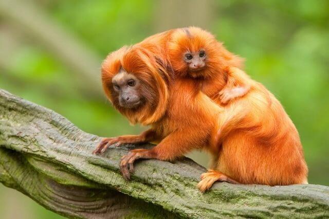 animals-in-brazil.jpg
