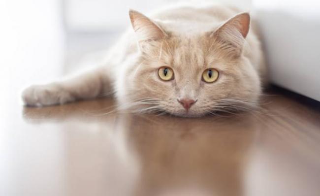 cat_ultima-1.png