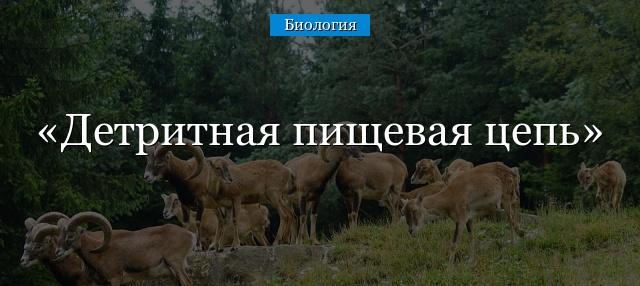 detritnaya-pischevaya-cep.jpg
