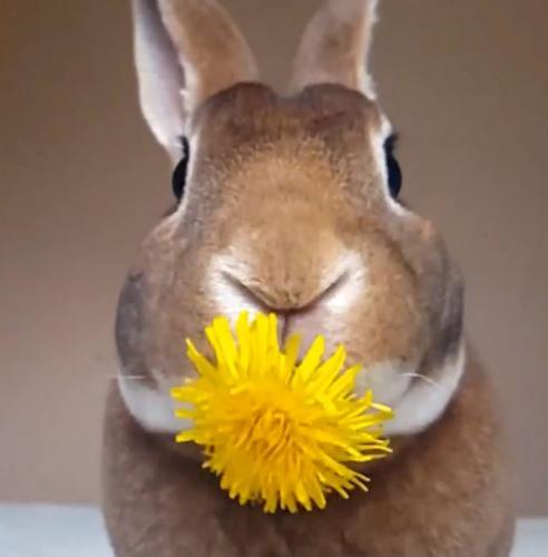 rabbit%20eats2.jpg