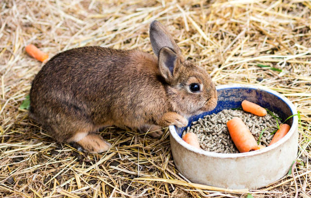 feed%20for%20rabbits5.jpg