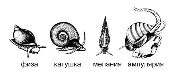 vidy_ulitok.jpg