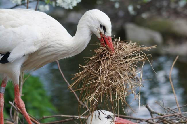 вьет-гнездо-1024x682.jpg