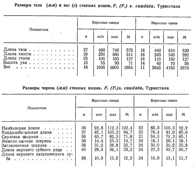 steppe_cats_measurements.JPG