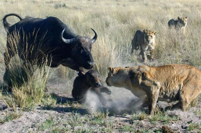 dikaya-priroda-afriki-xishhniki-11.jpg