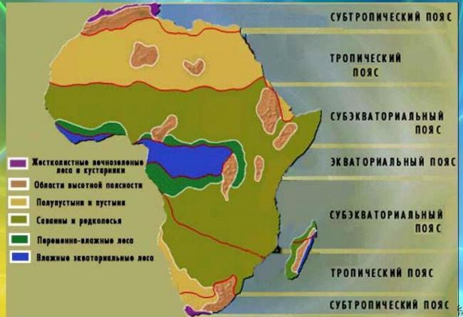 dikaya-priroda-afriki-xishhniki-4.jpg