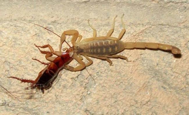 skorpion_bez_truda_dobyvaet.jpg