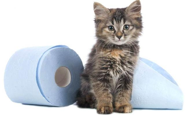cat-pee-smell-out-of-carpet-best-how-to-get-cat-pee-smell-out-of-carpet-new-how-to-get-cat-urine-removing-cat-urine-smell-from-carpet-peroxide_cr.jpg