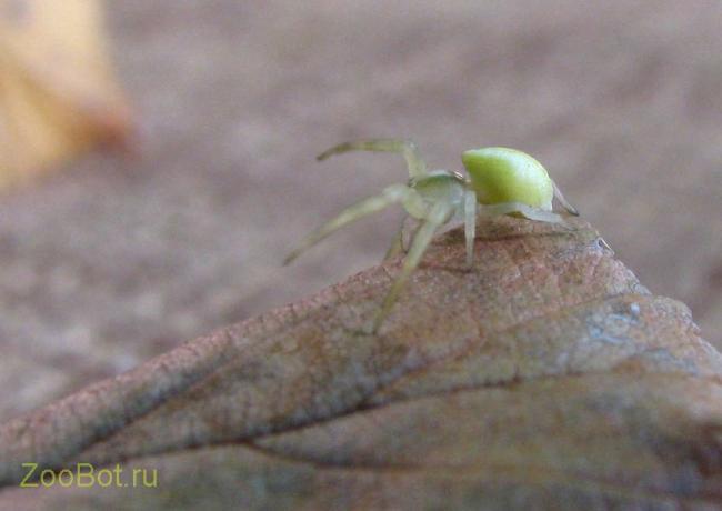 yello_spider4.jpg