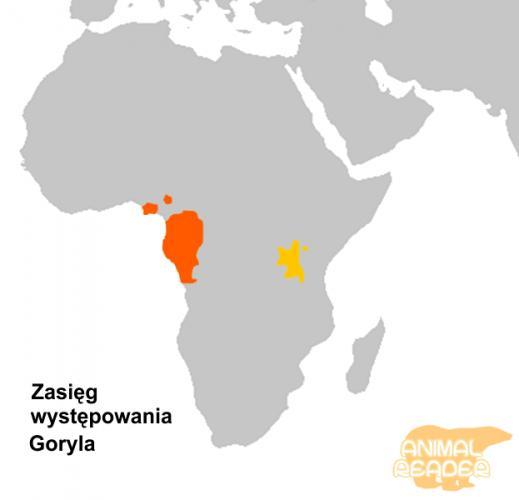 gorilla-samaja-bolshaja-obezjana-na-zemle_3_1.png