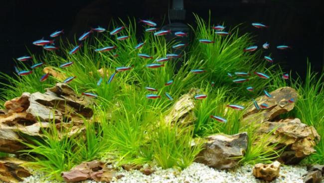 samye-malenkie-akvariumnye-rybki-700x396.jpg