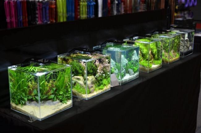 malenkie-akvariumy-imeyut-svoi-preimushhestva-700x464.jpg