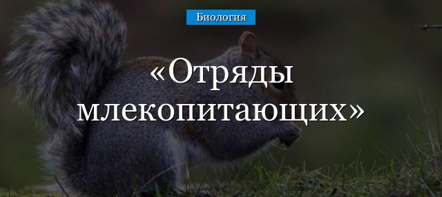 otryady-mlekopitayuschih.jpg