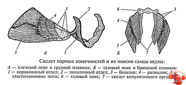 2-15-1.jpg