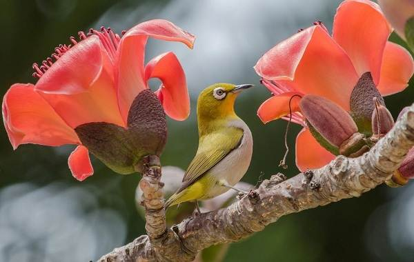 tropicheskie-ptitsy-opisanie-nazvaniya-vidy-i-foto-tropicheskih-ptits.jpg