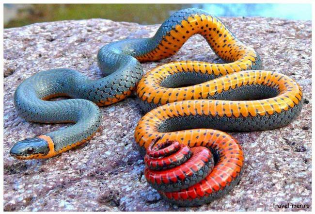 Змеи-Зеленого-континента.png