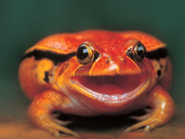 Оранжевая-жаба-1068x801.jpg