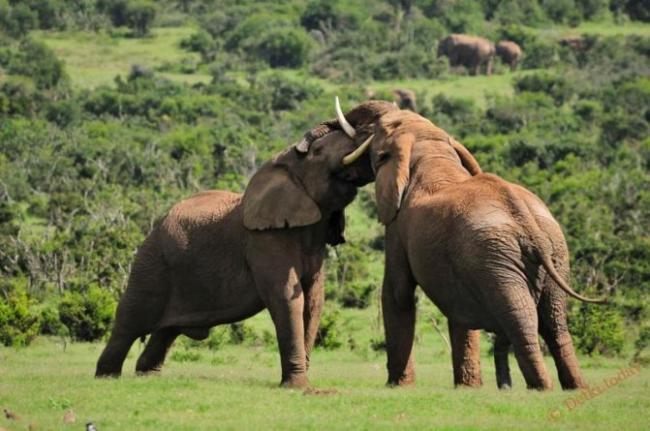 skolko-vesit-slon-pri-rozhdenii.jpg