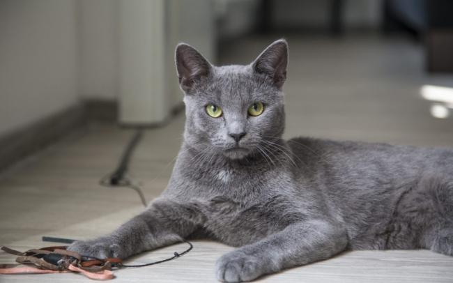 cat_lying_gray_111178_3840x2400.jpg