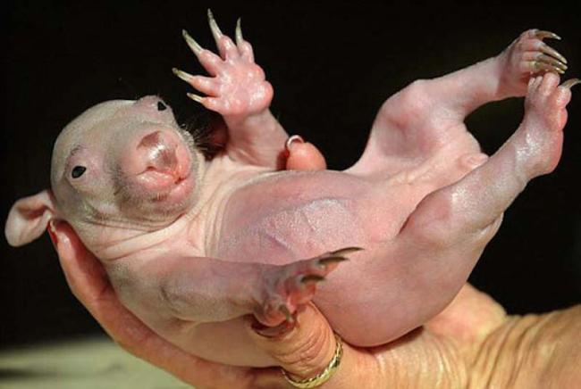 these-17-bald-animals-will-blow-your-mind-6.jpg
