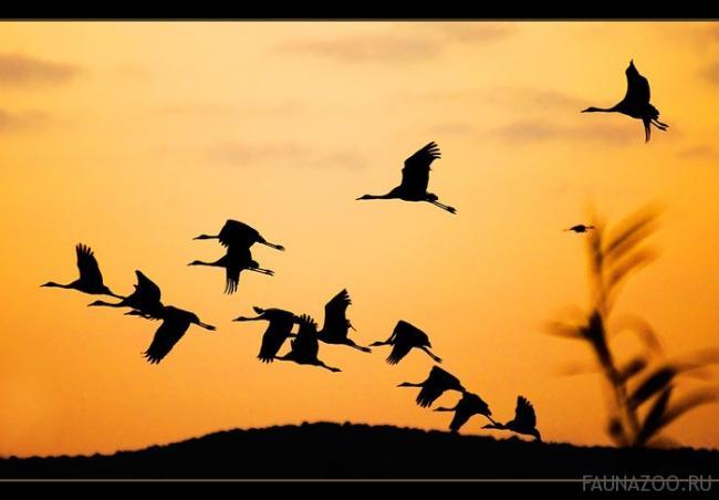 Ночные-перелеты-птиц.jpg