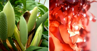 12 самых удивительных овощей и фруктов