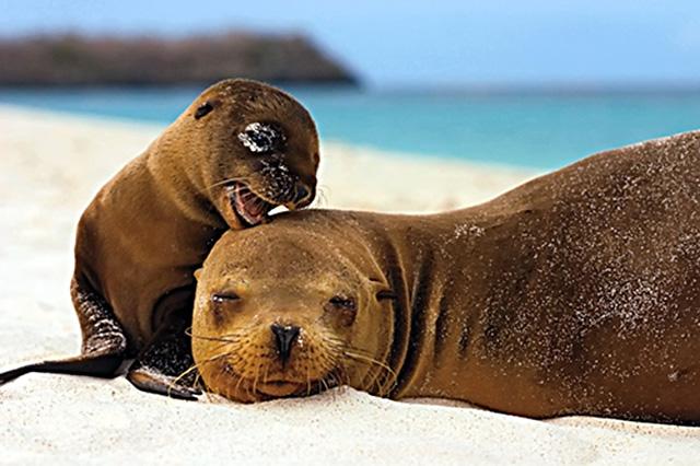 1-ушастые-тюлени.jpg