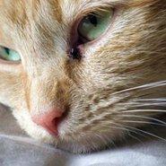 cat-calic_185x185_8fd.jpg