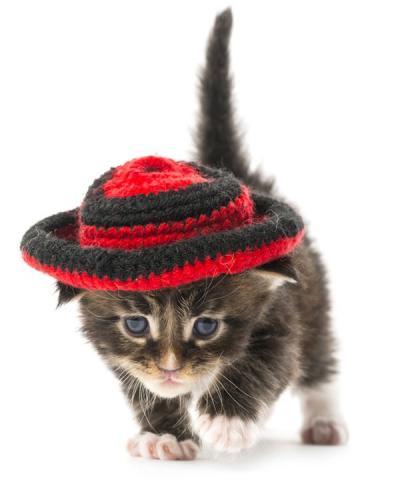 1518276410_kitten-maine-coon.jpg