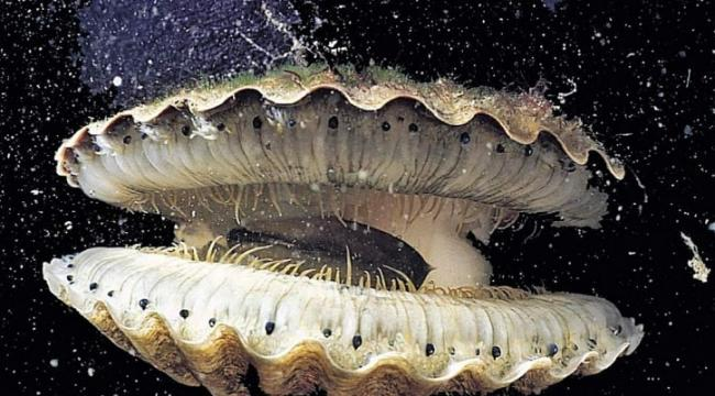 molluski.jpg