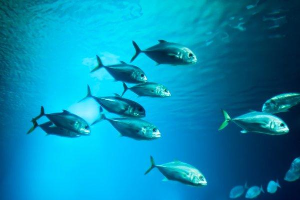 depositphotos_26209783-stock-photo-school-of-fishes.jpg