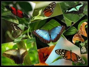 collage_schmetterlinge_mainau1-300x225.jpg