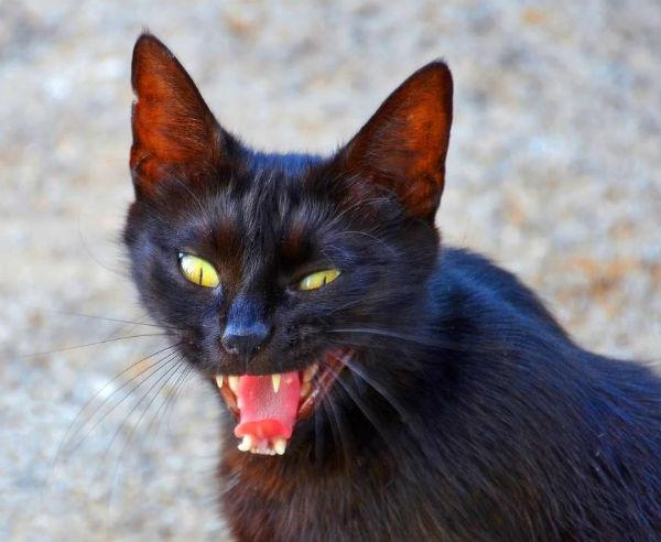 rabies-cats.jpg
