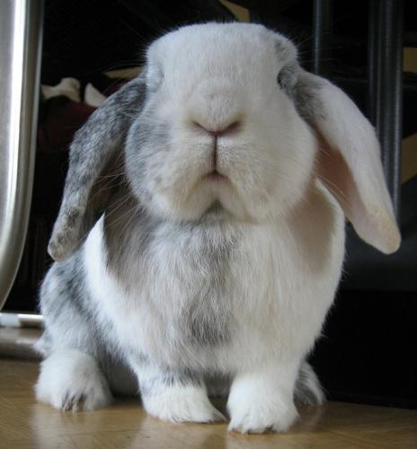 rabbit-4-1.jpg