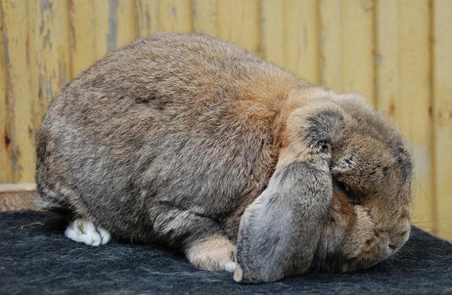 rabbit-5-1.jpg