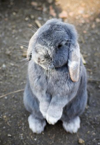bunny-6-1.jpg