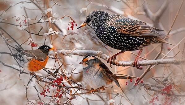zimuyushhie-pticy-nazvaniya-opisaniya-i-osobennosti-zimuyushhix-ptic-1.jpg