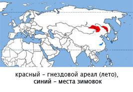 журавль-даурский-135-2_.jpg
