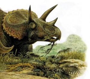 triceratops-300x262.jpg