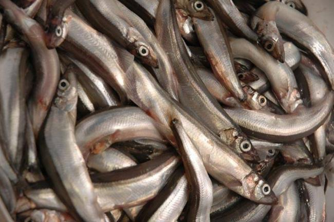 Рыба-мойва-капелан-фото.jpg