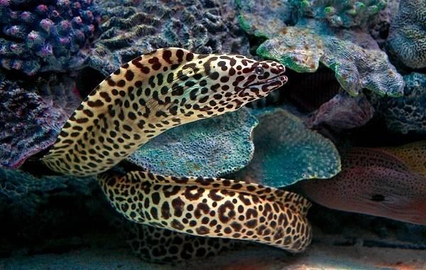 murena-ryba-opisanie-osobennosti-vidy-obraz-zhizni-i-sreda-obitaniya-muren-2.jpg