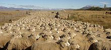 220px-Ovejas_en_Patagonia_-_Argentina.jpg