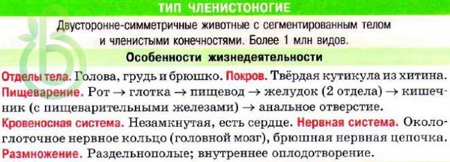 tip-chlenistonogie-obshhaya-harakteristika-stroenie-razmnozhenie-raznoobrazie-i-znachenie-chlenistonogih2.jpg