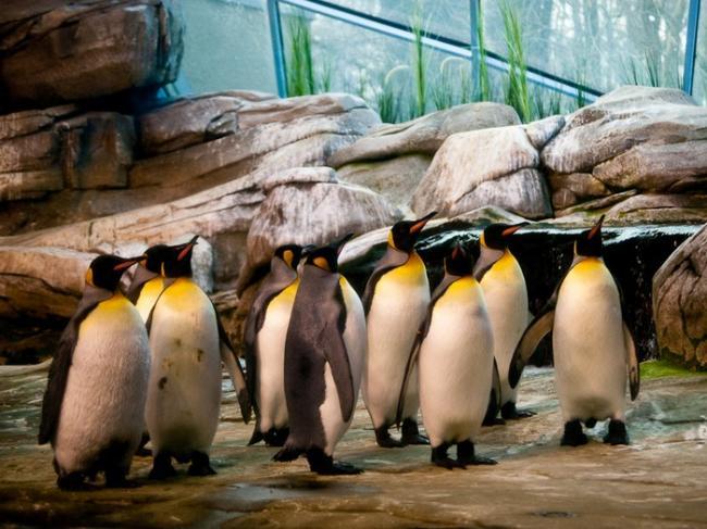 pingviny-v-zooparke.jpg