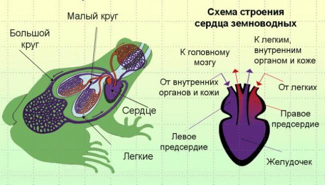 krovenos-sist-zemnov.jpg